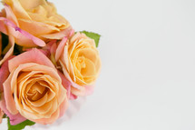 pink and peach roses