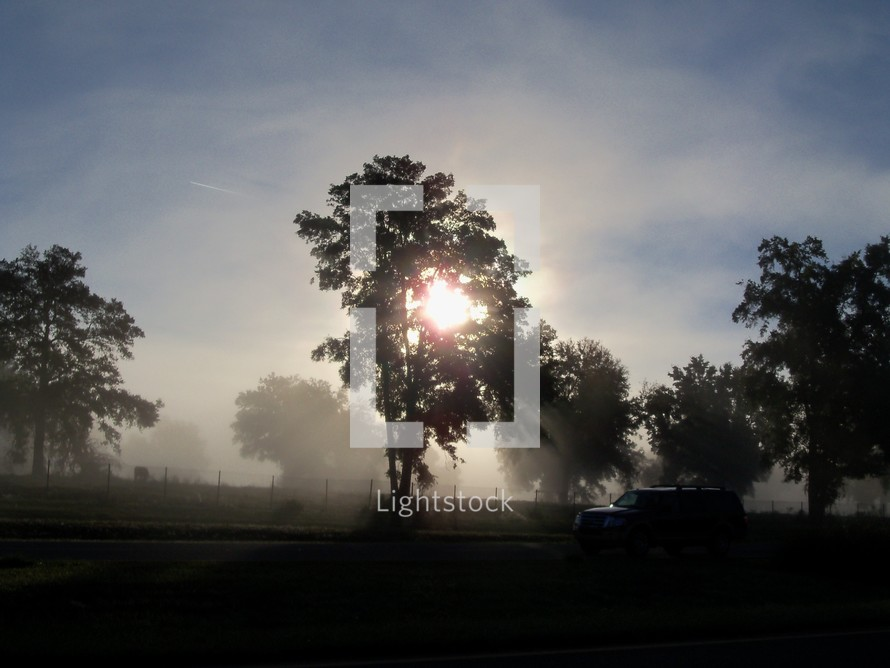 Morning Fog through the trees lights up the morning sky as cattle graze on a hill dwarfed by sunlight, fog and trees.