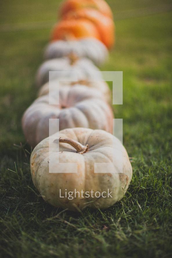 Pumpkins in the grass.