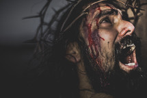face of Christ in agony