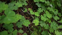 a bed of clover