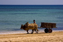 man with an ox and wagon walking on a beach
