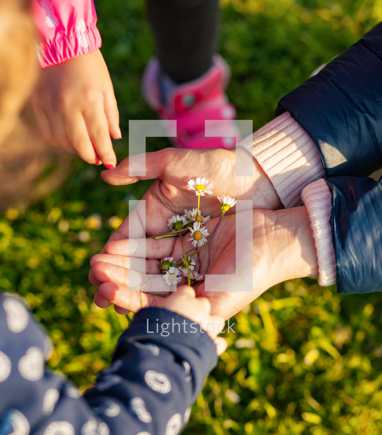Little girls collecting small daisies for mom