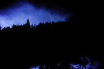 night trees silhouette