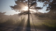 sun shining through a tree