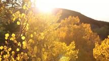 sunlight shining on a fall tree