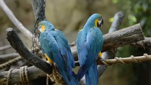 Parrots perched on tree limbs with rope.
