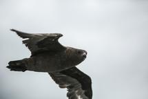 Large bird flying