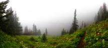 fog in a green meadow