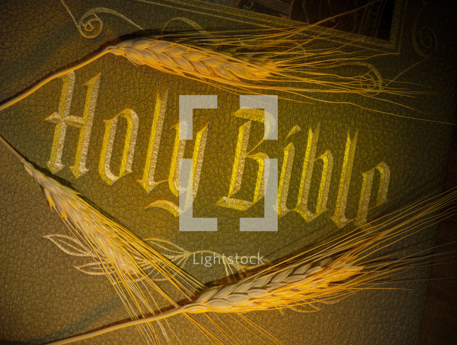 Stems of wheat on a Holy Bible.