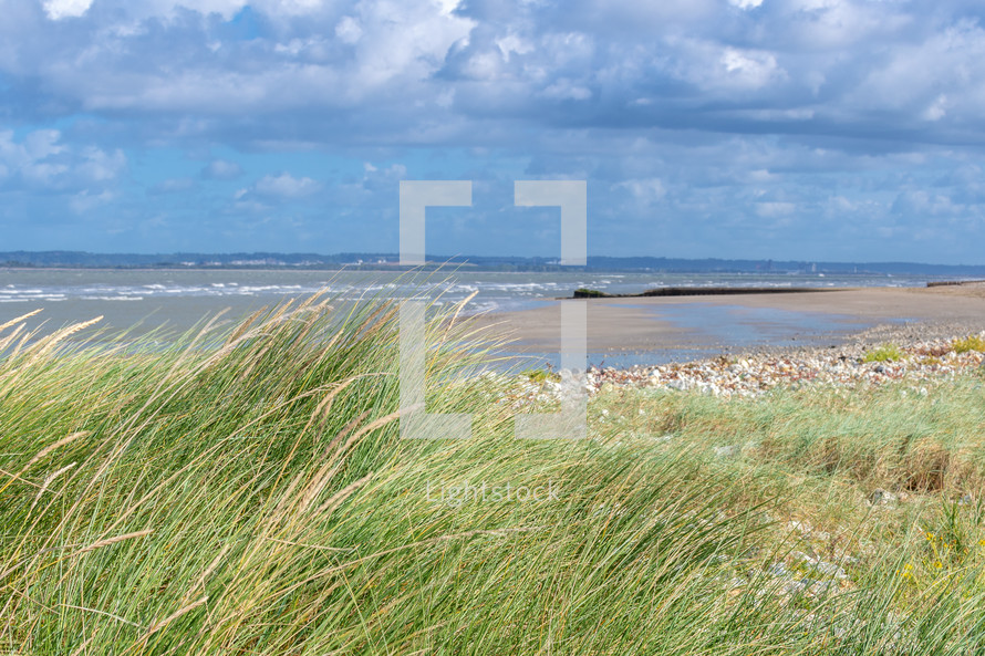 tall grasses along a shore in Normandie