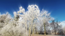 clouds over icy winter trees
