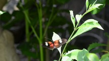 Butterfly flying off a leaf.