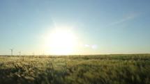 wind turbines in a field of wheat