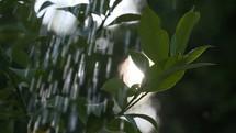 falling rain on green leaves