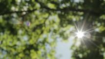 sunburst through the leaves of trees