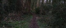 path in a forest