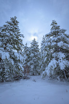 Evergreen trees on a slope covered in snow during winter with cloudy overcast sky