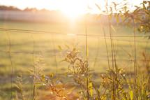 sunlight on a fence