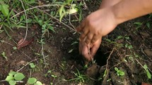 Planting a small tree in the ground.