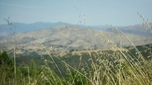 tall grasses and a mountain view