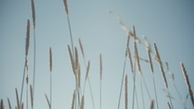 straw blowing in the breeze