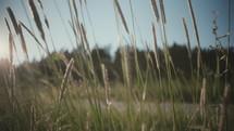 straw in a field
