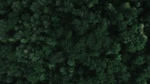 aerial view over a green forest