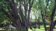 Cinematic sun flare through the trees in a Miami Public Park