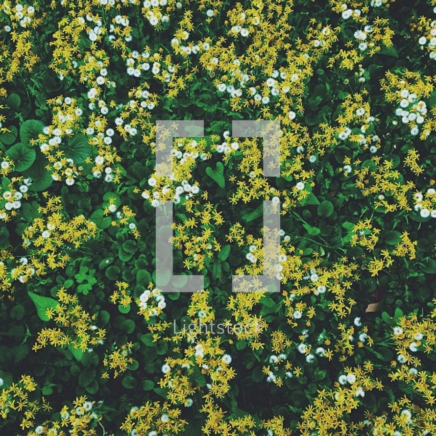 Small yellow and white flowers on a background of greenery.