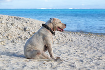 a dog resting in the sand on a beach