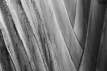 leaf texture in black and white