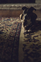 a dog resting on a rug