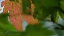 pink leaf in green leaves