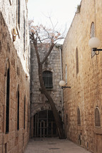 old city street with tree growing through stone