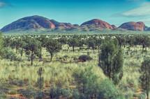 outback landscape in Australia