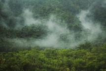 clouds meet trees