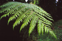 A fern frond in a forest.