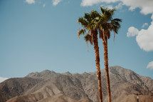 mountain peaks and palm trees in California