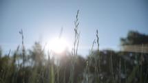 green straw in a field