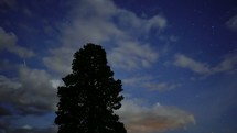 passing clouds above a tree