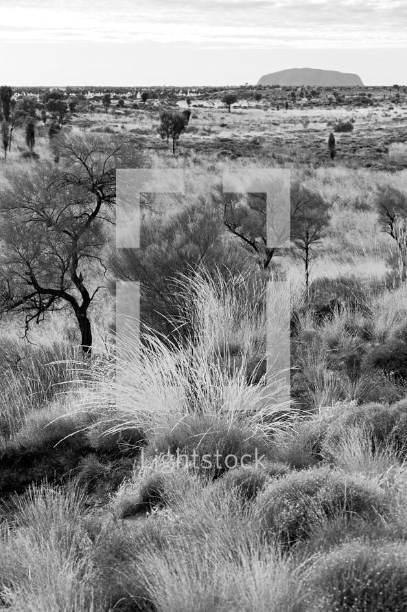 Australian Outback landscape