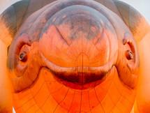 fish hot air balloons