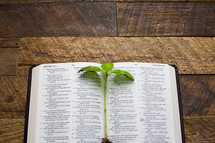 A green stem of leaves on an open Bible.