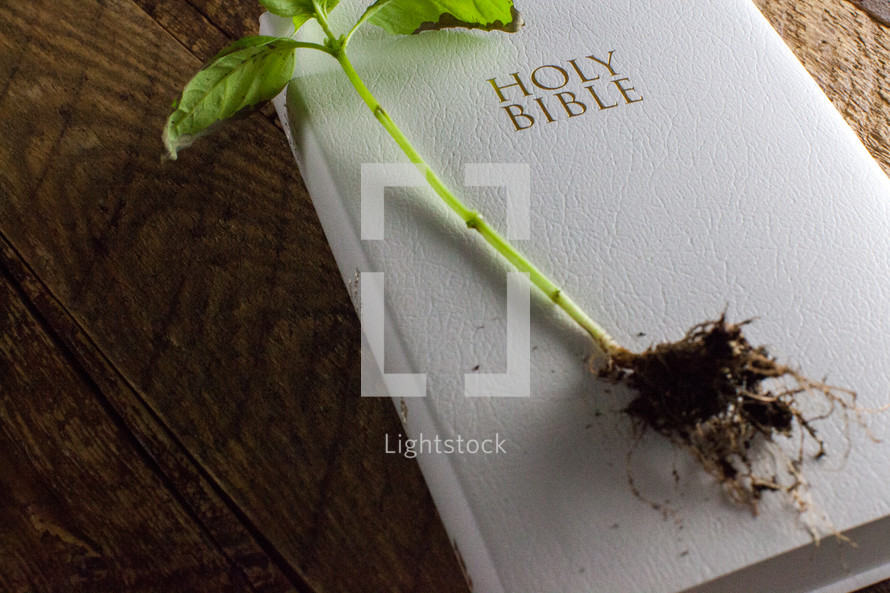 sprout on top of a Bible