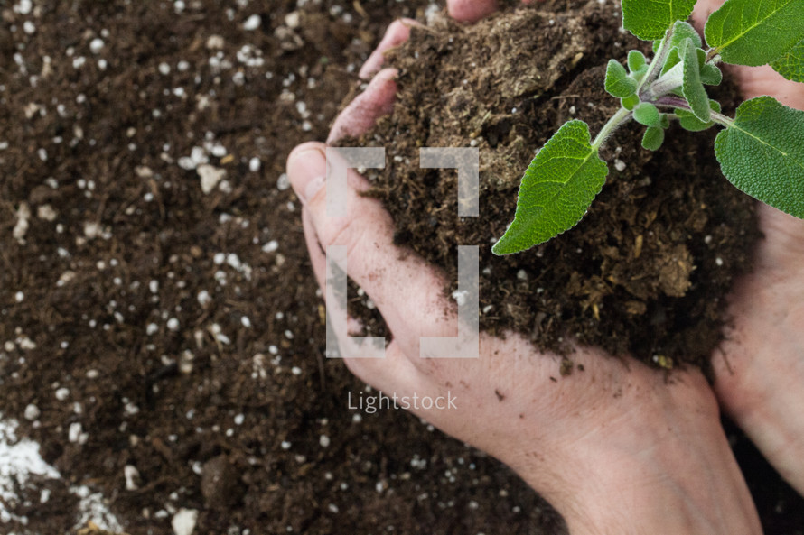hands holding a plant and soil