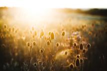 warm sunlight on a field