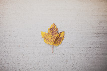 yellow leaf on concrete