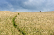 worn path