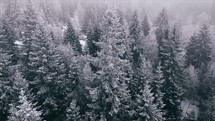 drone flying over a winter pine forest